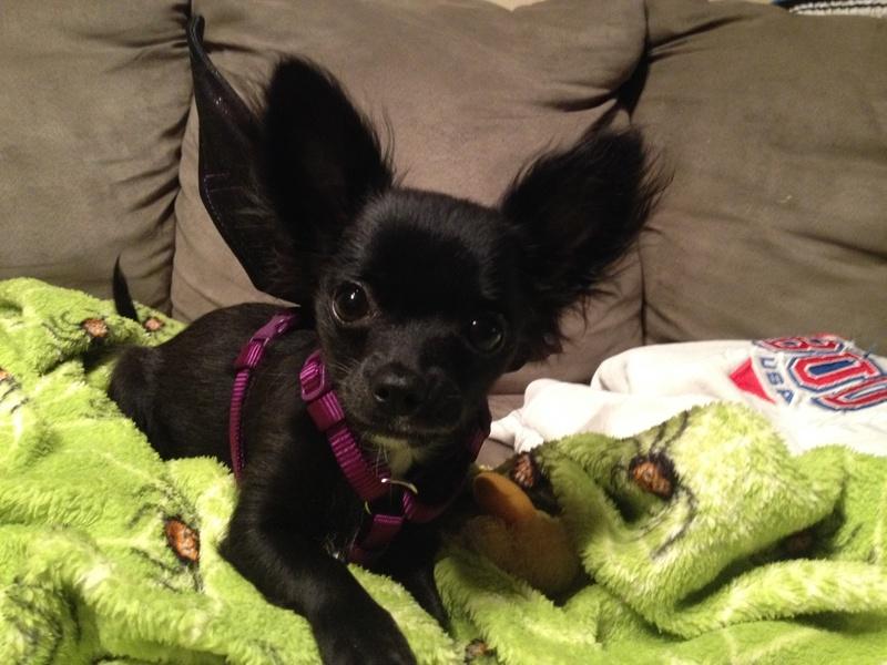 Bat Dog!