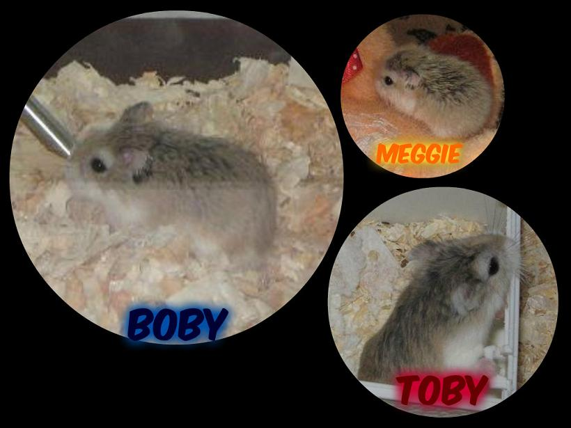 The hamster family