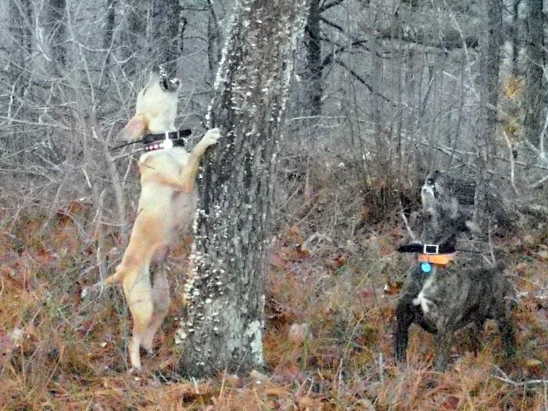 Mountain Squirrel Dog Kennels