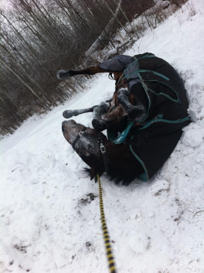 Renegade rolling in te snow