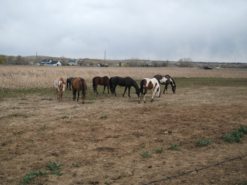 Grazing in the pasture! (May 2011)