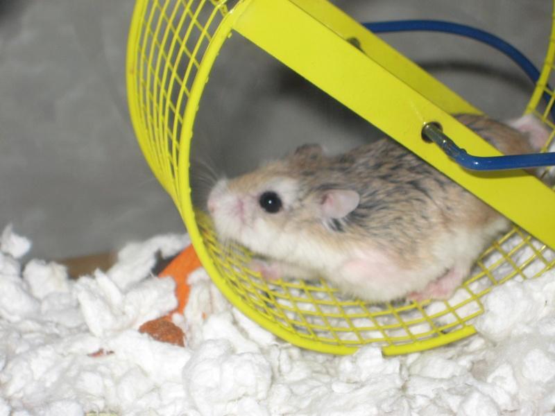 Speed Hamster