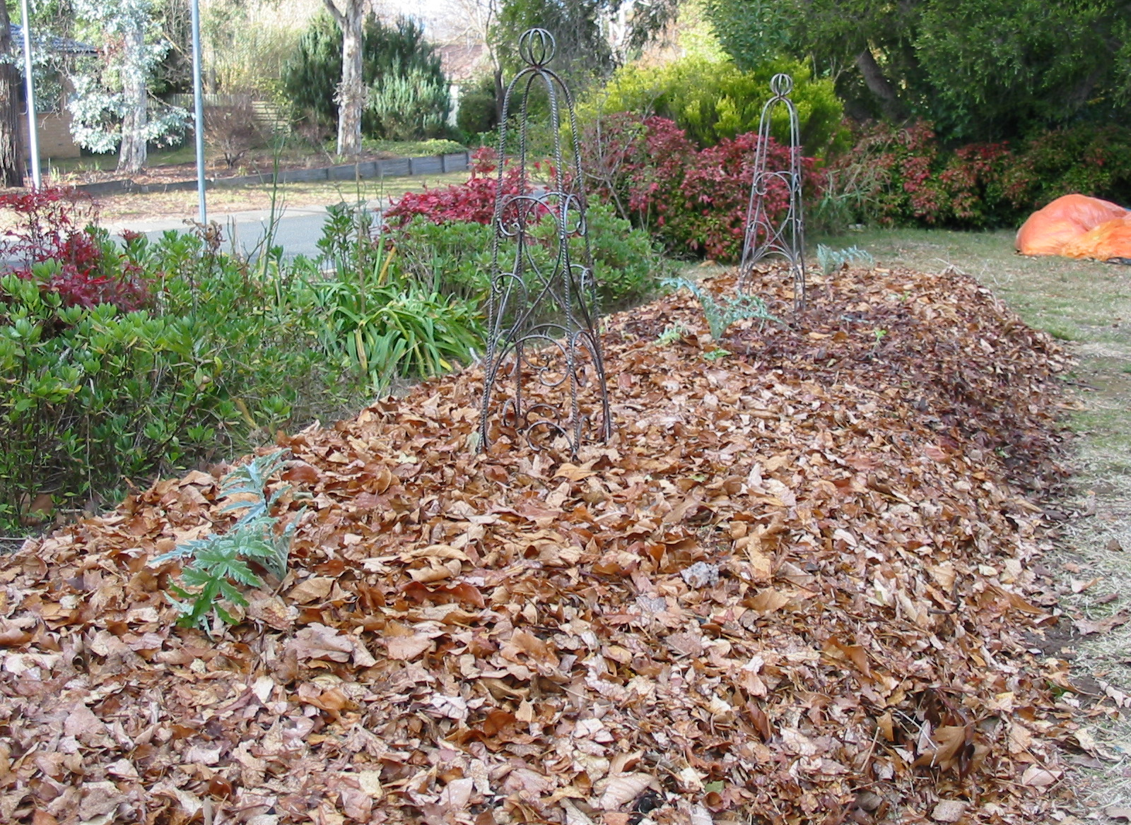 Garden #2 - planting