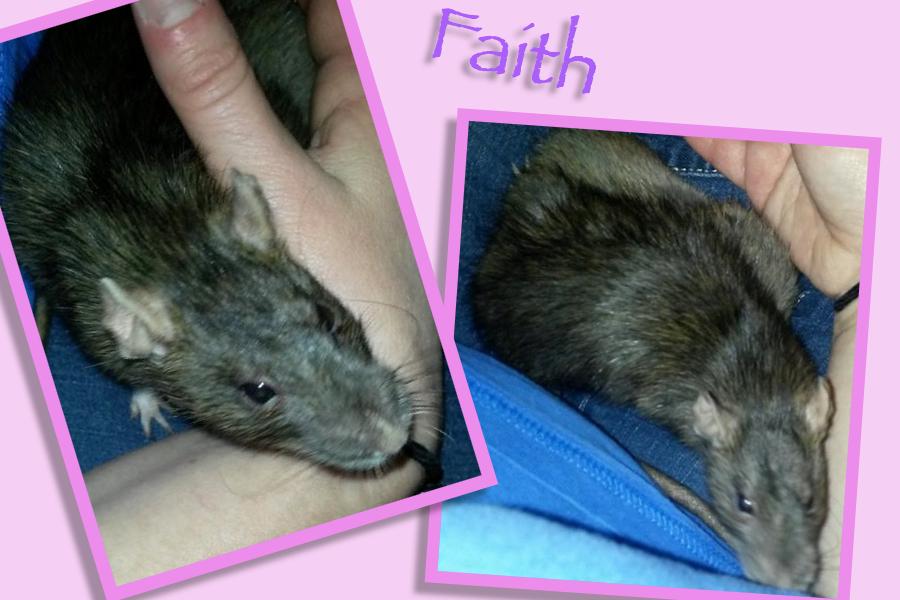 Meet Faith!