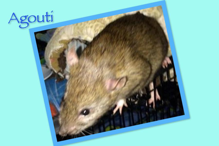Meet Agouti