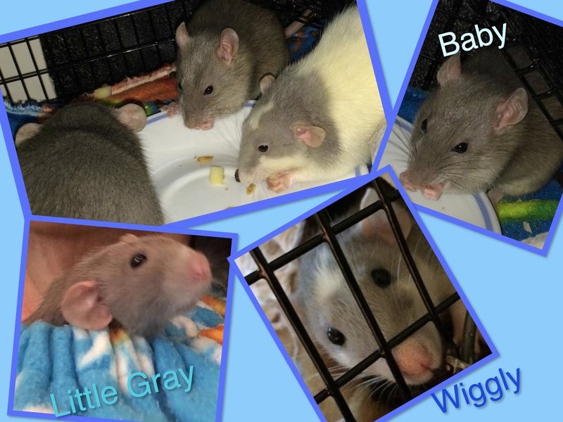 Meet Baby, Little Gray, and Wiggly