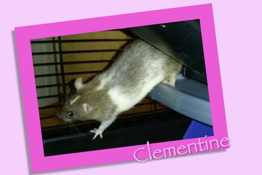 Meet Clementine!