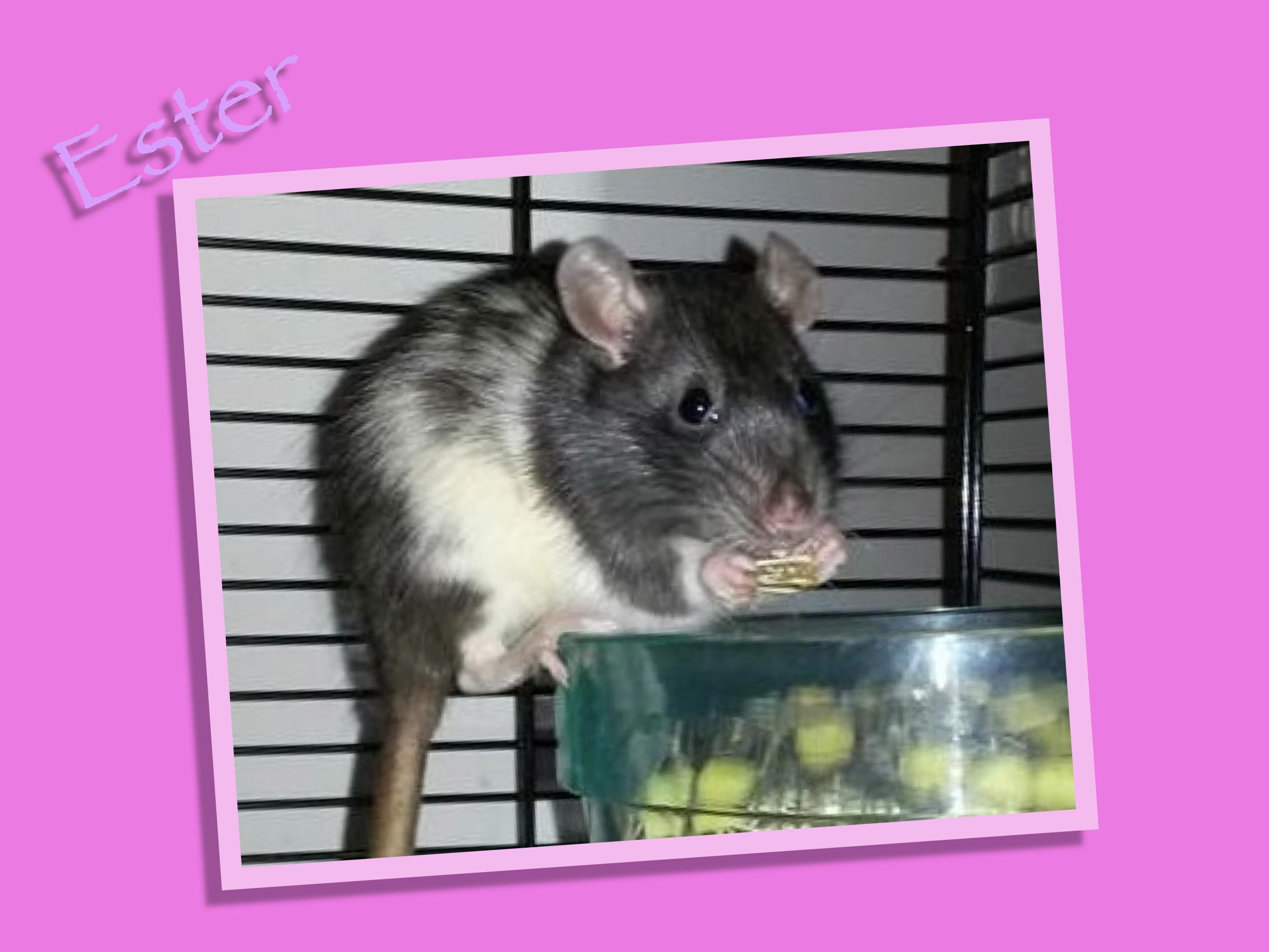 Meet Ester!