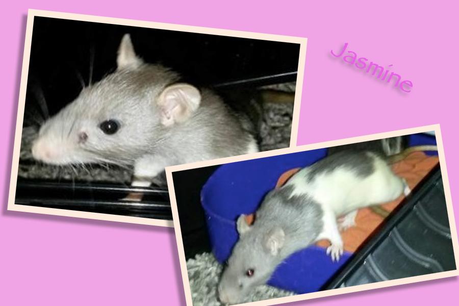 Meet Jasmine!