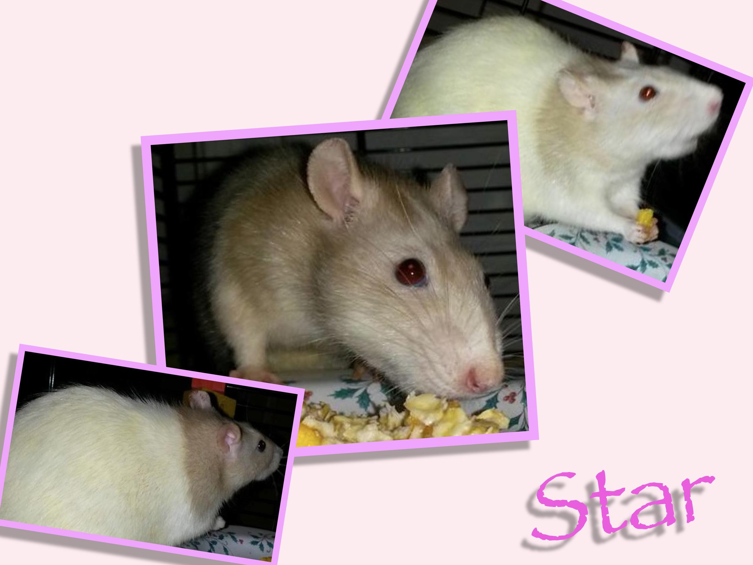 Meet Star!