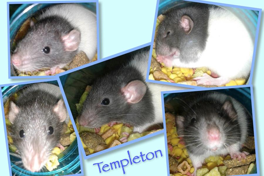 Meet Templeton