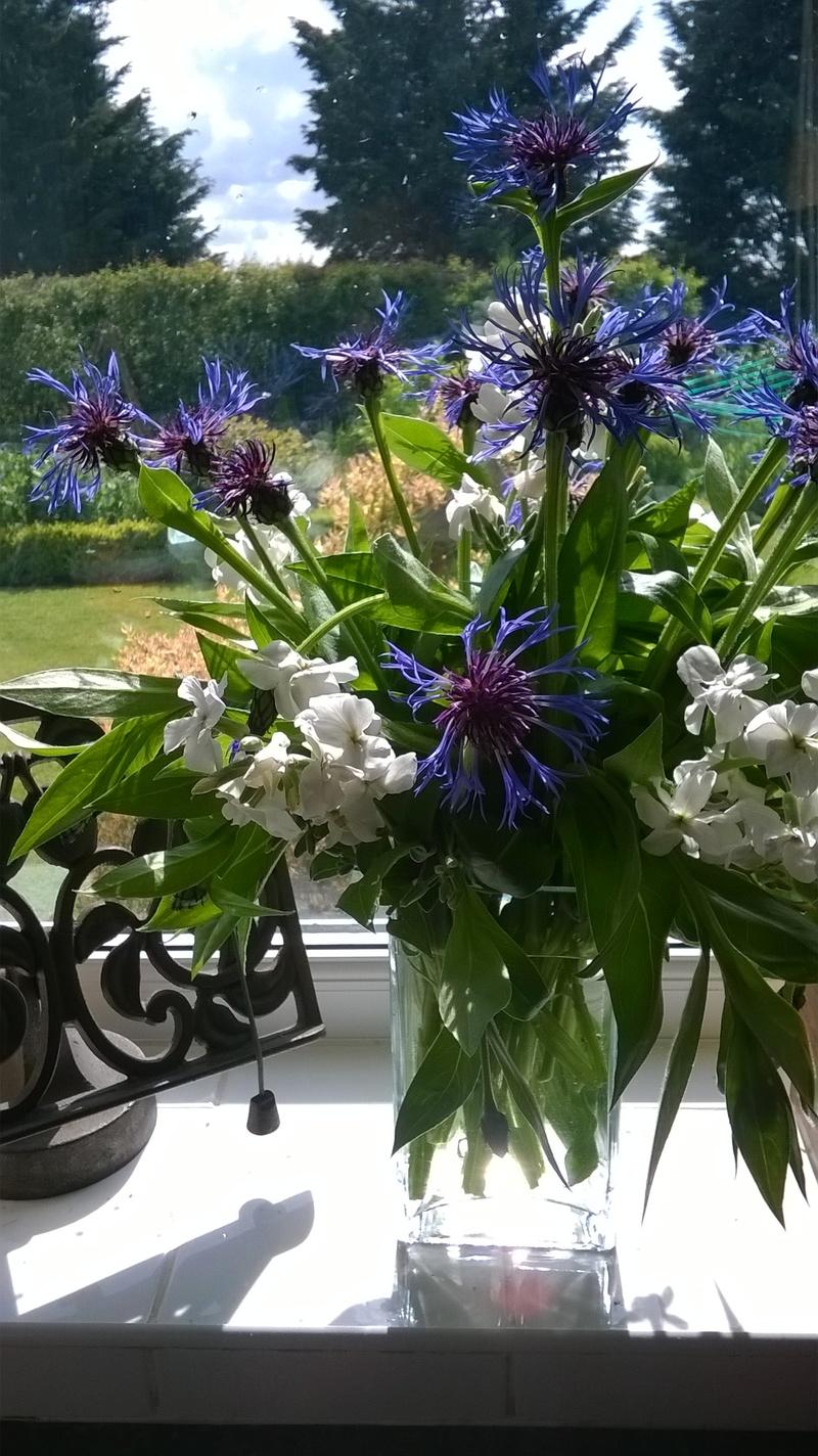 Centaurea and Perennial Stock