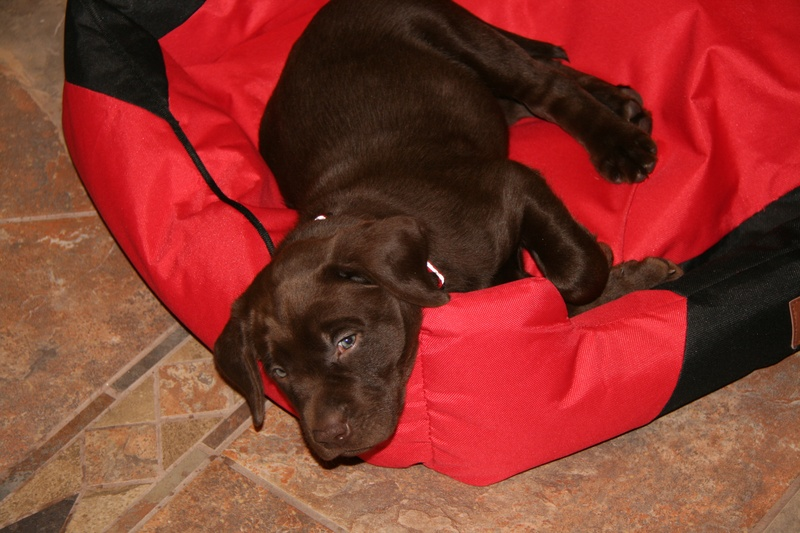 Cache at his new home.