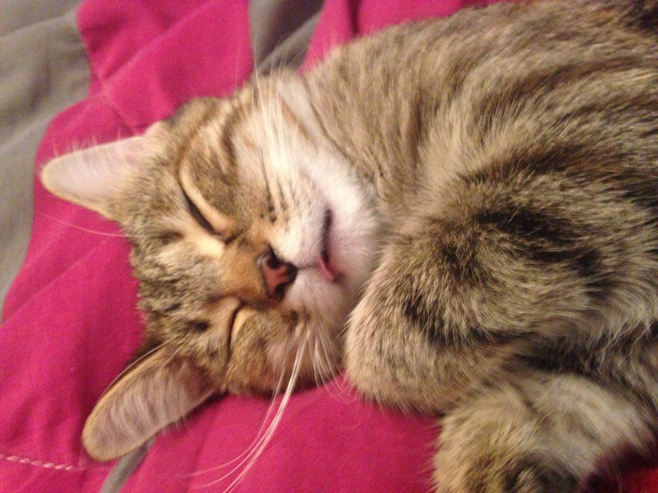 Rory sleeps