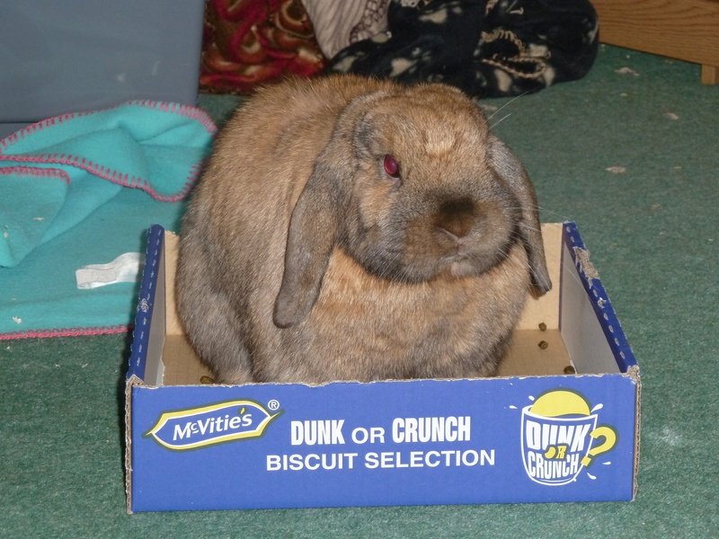 As it says on the box Dunk or Crunch, I dont think I will find a mug that is big enough.........