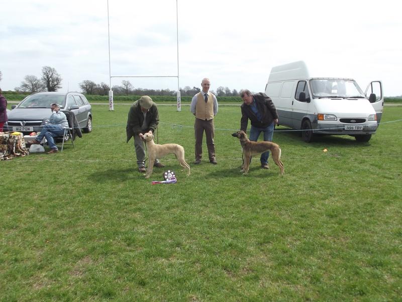Champion and Reserve Lurcher Puppy
