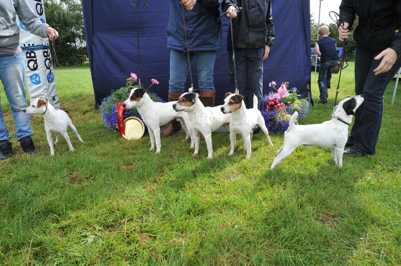Class 25 Stud Dog and Get (With at least 2 offspring from different litters)