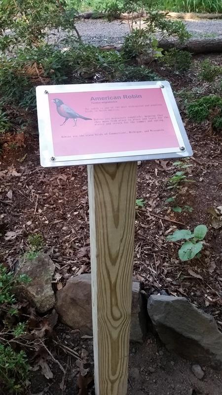 Robin sign