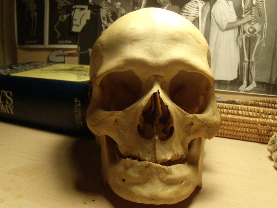 Human Skull uncut