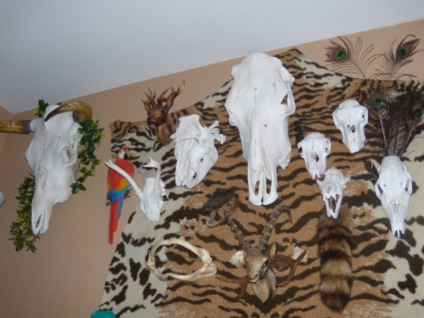 Some of the Animal Skulls I have