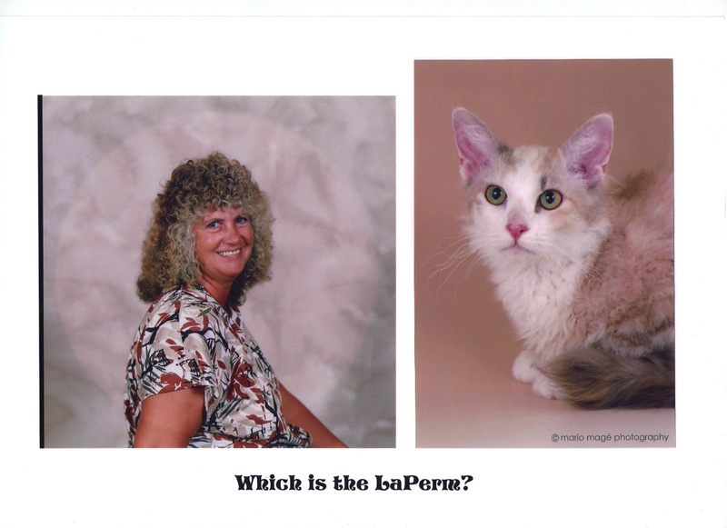 Which one's the LaPerm?