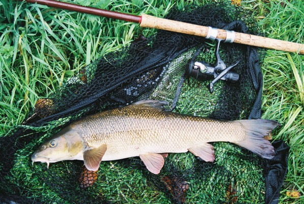 Barbel caught by Ron 2