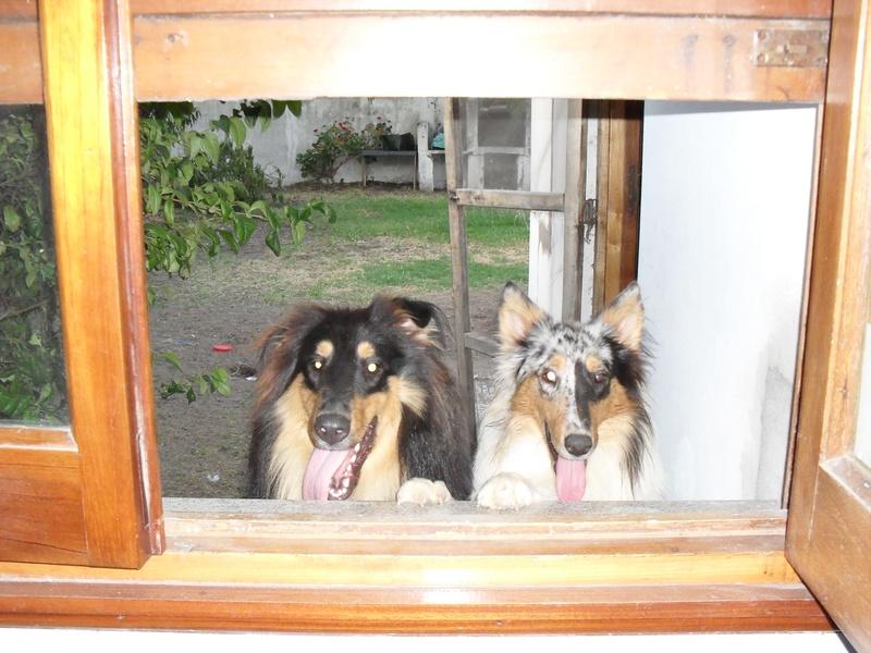 Por la ventana
