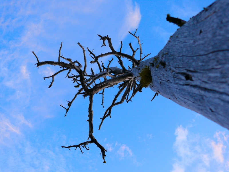 Monon Lake Sky - Fire Recovery