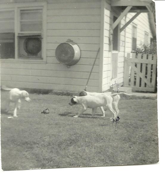 Pepaw's pups