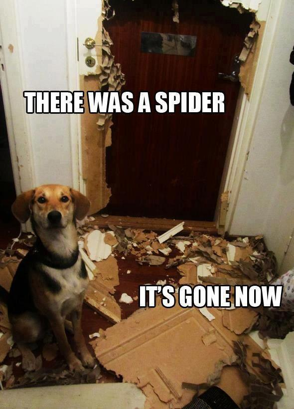IT WAS THE SPIDER!