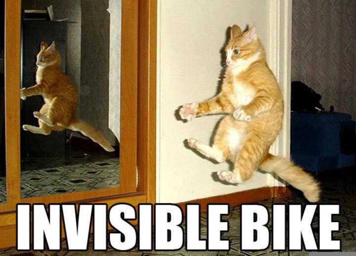 funny cat pics -