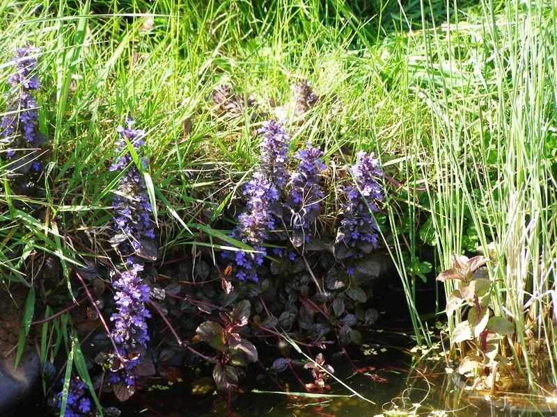 Bugle by pond
