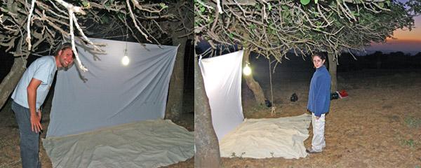 Light trap at Odem Forest