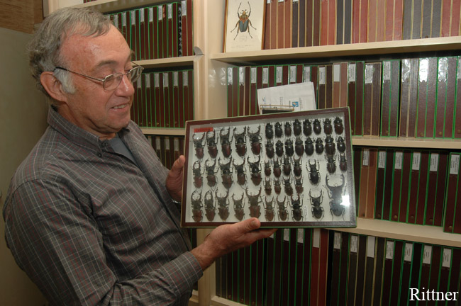 Pierre Tauzin and Lucanus collection