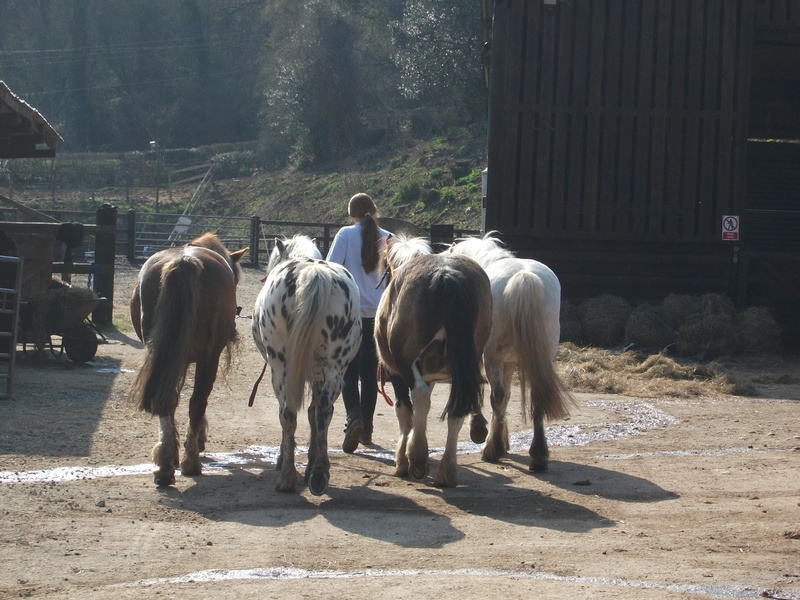 Turning out the ponies