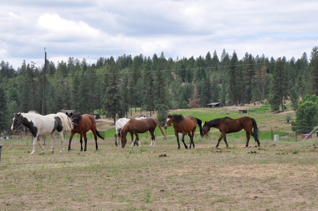 Our Resident Horse Herd