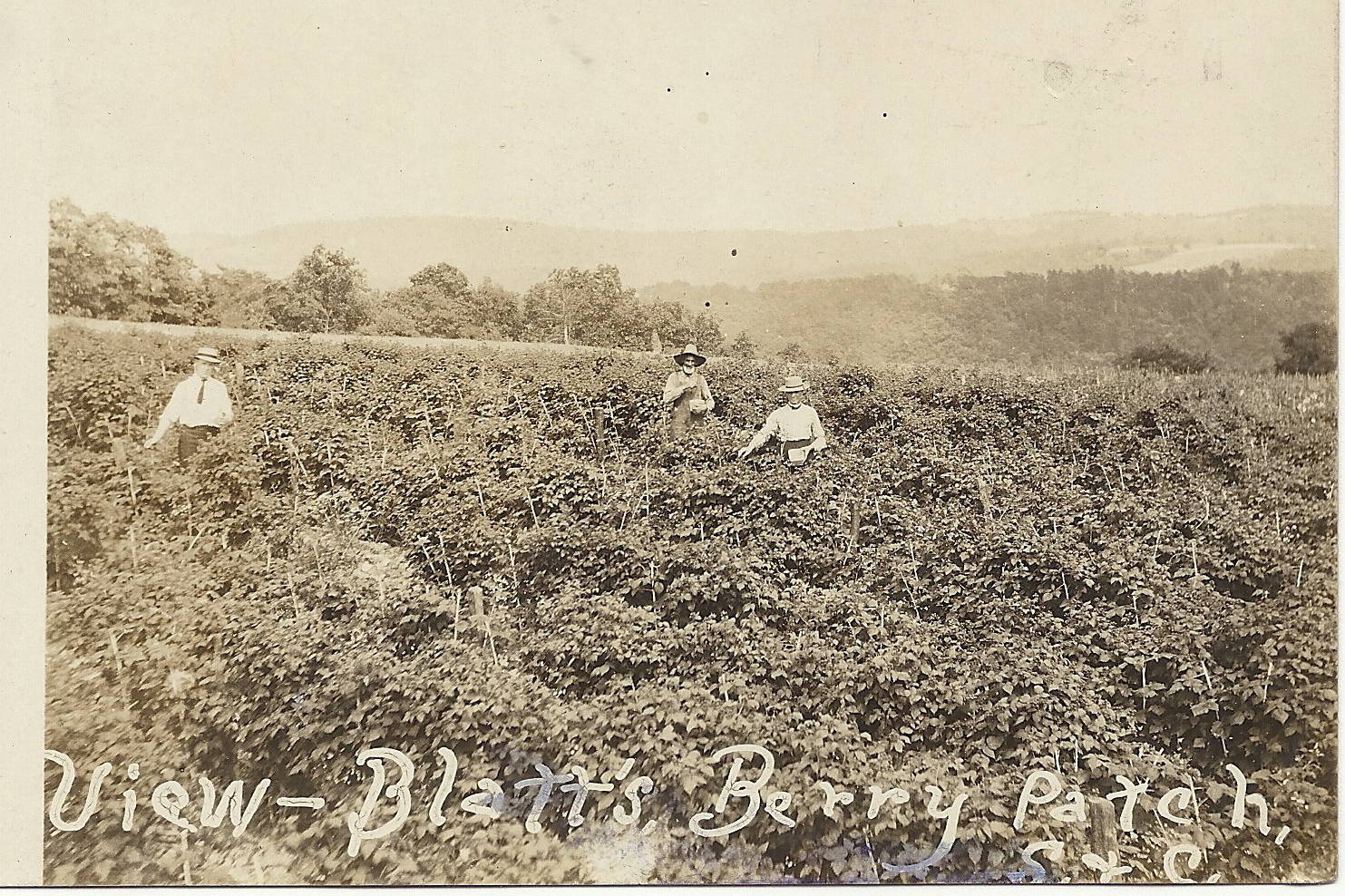 View of Blatt's Berry Patch