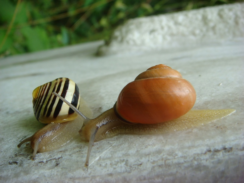 Snail on the move