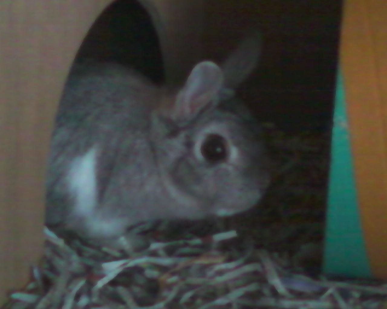 Phoebe Funny Bunny