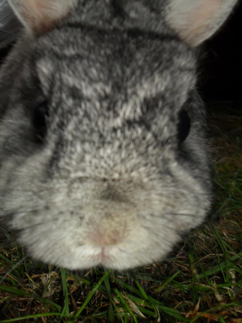 Phoebe Bunny!!!!!!