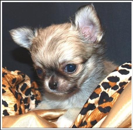 Charlie (re-named Franky)