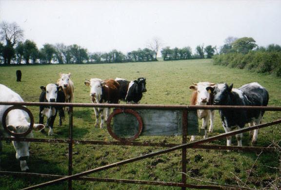 The Ancestral Farm