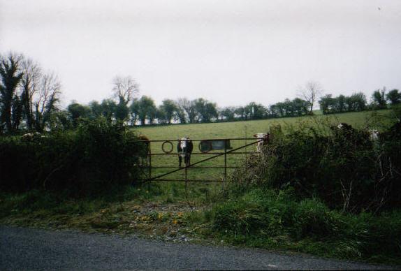 Cody's Field