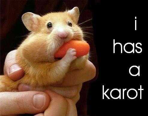 Funny Hamster #3