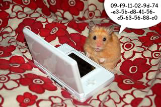 Funny Hamster #1