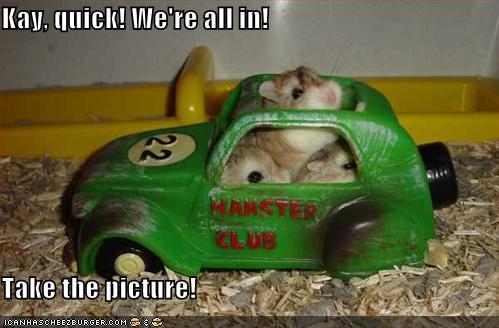 Funny Hamster #2