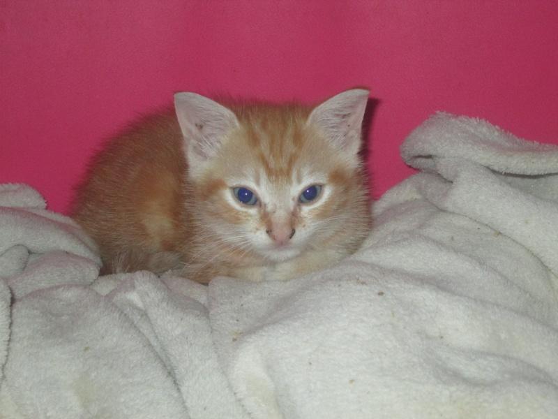 kitten reserved
