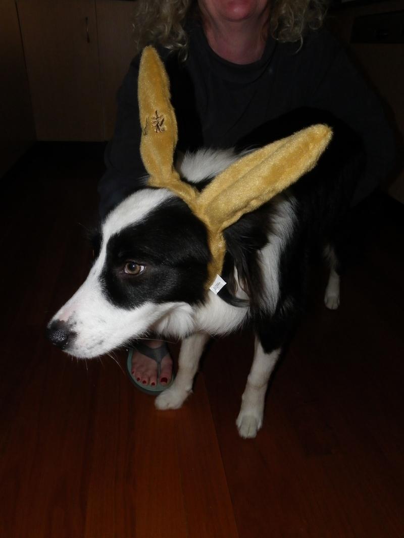 Tillie @ Easter in Avoca