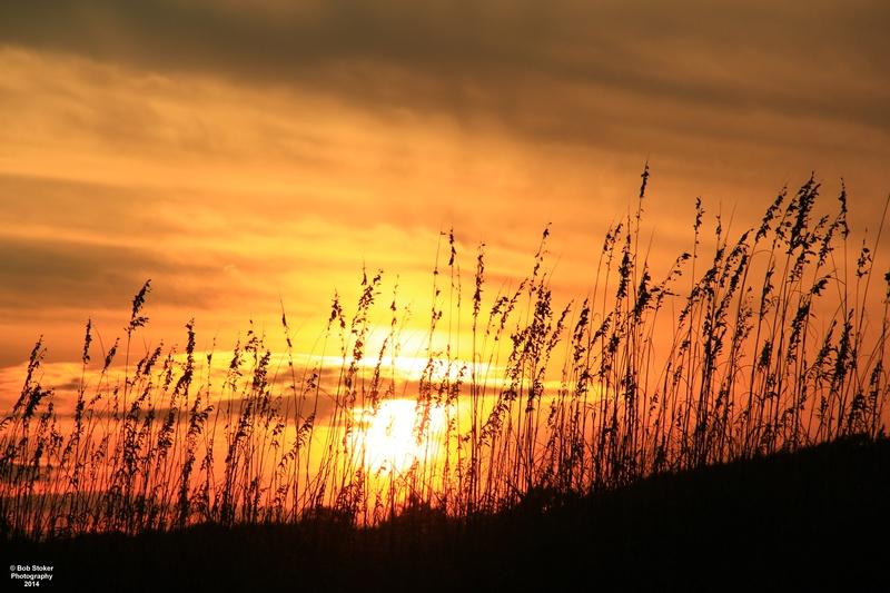 Evening Sunset Sea Oats