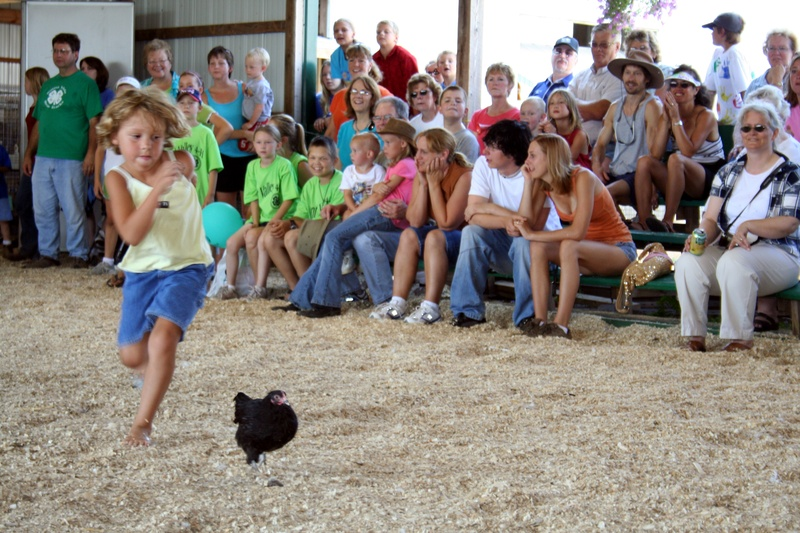 More chicken races